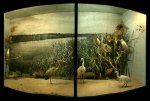 Still Life / Palaces of Memory / Yuval Yairi